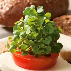 Microgreens - Green kale - hojas jóvenes con un sabor excepcional - 900 semillas -