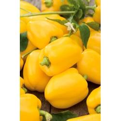 Poivron - Oliwia - 65 graines - Capsicum L.