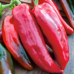 """Pepper """"Condo di Toro Rosso"""" - sweet variety - 42 seeds"""