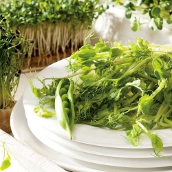 Sugar pea shoots - tastiest part of the plant - Baby Leaf