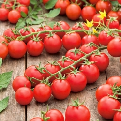 """Cherry tomato """"Cherrola"""" - for garden and tunnel cultivation - 20 seeds"""