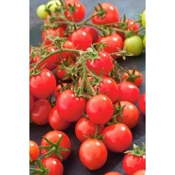 Kirsstomatid - Garden Perle  - Lycopersicon esculentum Mill  - seemned