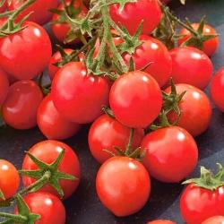 """Tomato """"Gartenperle"""" - vividly red, cherry-type fruit"""