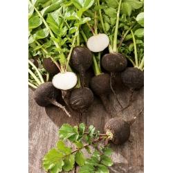 Black Radish – Round Black seeds - Raphanus sativus - 1000 seeds