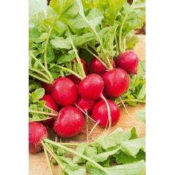 """تربچه """"Carmesa"""" - دور، ریشه های قرمز - SEED TAPE - Raphanus sativus L. - دانه"""