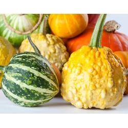 Gourd Warted Mixture seeds - Cucurbita pepo - 100 seeds