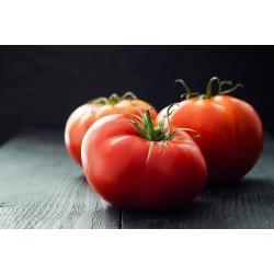 Tomat - Malinowy Ożarowski - töödeldud seemned -  Lycopersicum esculentum