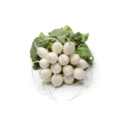 "Radish ""Aphrodite"" - white, shiny, smooth skin - 425 seeds"