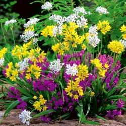 Dekoratiivne küüslauk - mix - pakend 20 tk - Allium
