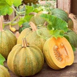 "Squash ""Danka Polka"" - variety grown for seeds - 15 seeds"