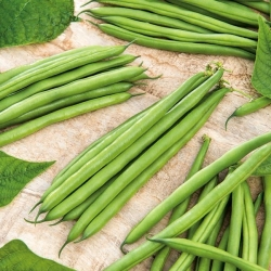 """Green French bean """"Finezja"""" - extremely resistant to diseases"""