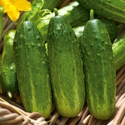 """Cucumber """"Edmar F1"""" - pickling, bitterness-free variety for field and greenhouse cultivation - 105 seeds"""
