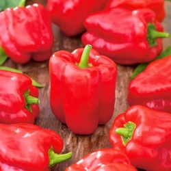 "Pepper ""Ozarowska"" - red, sweet variety - 90 seeds"