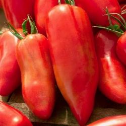 "Tomato ""Cornabel F1"" - tall, greenhouse variety - 15 seeds"