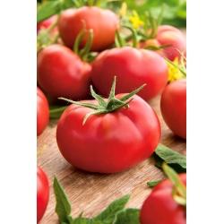 Tomat - Hubal - Lycopersicon esculentum Mill  - seemned