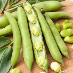 "Broad bean ""Bonus"" - medium-early variety"