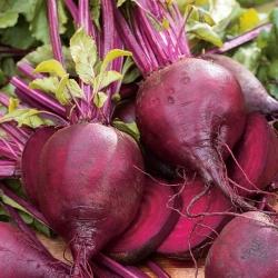 """БИО - Цикла """"Детроит 2"""" - сертификовано органско семе - 500 семена - Beta vulgaris var. conditiva"""