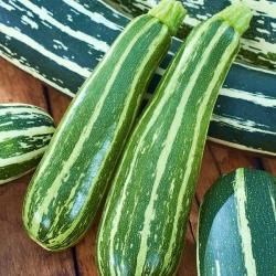 Puhmik - õlikõrvits - Striato d'Italia - 10 seemned - Cucurbita pepo