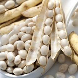 "Bean ""Aura"" - dwarf variety for dry seeds - 100 seeds"