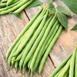 """Bean """"Esterka"""" - tasty, stringless, green pods"""