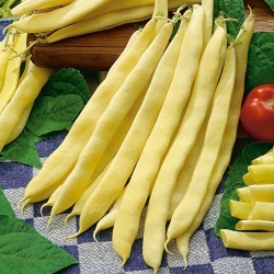 "Dwarf, yellow French bean ""Galopka"" - 100 seeds"