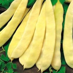 """Bean """"Supernano Giallo"""" - an ordinary dwarf bean variety - 25 seeds"""