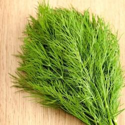 "Garden dill ""Turkus"" - 2800 seeds"