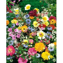 Annual medium-tall growing plants variety mix - 50 seeds