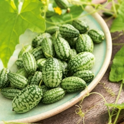 Mexikói savanyú uborka, Cucamelon, Egér dinnye - 9 mag - Melotria scabra - magok