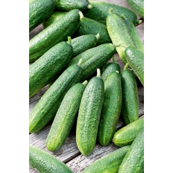 """Cucumber """"Partner"""" - self-pollinating variety for field, greenhouse or tunnel cultivation - 105 seeds"""