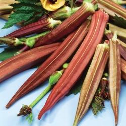 "Okra ""Burgundy""; Okro, Ochro, Lady's fingers - 30 seeds"
