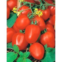 """Field, dwarf tomato """"Frodo"""""""
