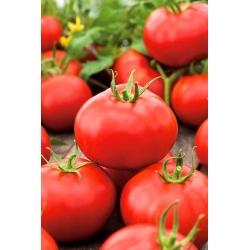 """Tomato """"Alka"""" - field variety - 250 seeds"""