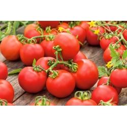 "Tomato ""Ray"" - field variety - 225 seeds"