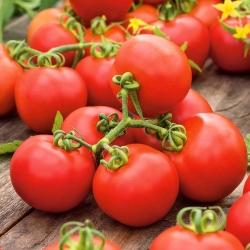 """Tomato """"Promyk"""" - field variety - 225 seeds"""