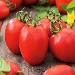 Tomato Kmicic seeds - Lycopersicon esculentum - 500 seeds