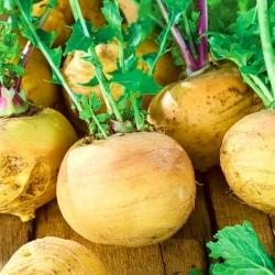 """Turnip, White turnip """"Golden Ball"""" - 2500 seeds"""
