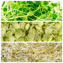 Sprouting seeds - Mild mix