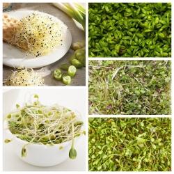 Sprouting seeds - Rejuvenating mix