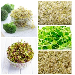 Sprouting seeds - Selection for women