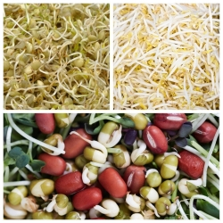 Sprouting seeds - Body strengthening selection