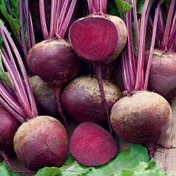 "Red beetroot ""Nobol"""
