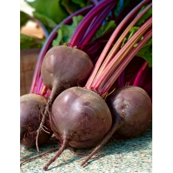 """Beetroot """"Nochowski"""" - productive variety with dark red flesh - 500 seeds"""