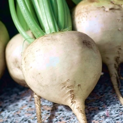 """Beetroot """"Snow Ball"""" - white-root variety - 250 seeds"""