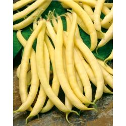 """Kollased pruunid oad """"Polka - mantlid"""" - Phaseolus vulgaris - seemned"""