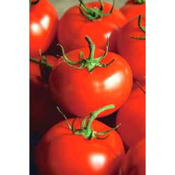 """Tomato """"Ondraszek"""" - field variety for preserves and direct consumption"""