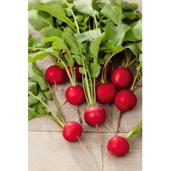 """Radish """"Lidka"""" - for cultivation from early spring until late autumn - 850 seeds"""