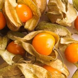 Cape Gooseberry, biji Ground Cherry - Physalis peruviana