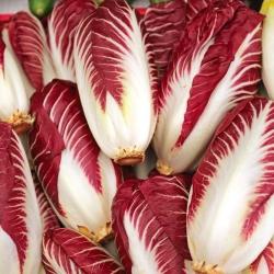 "Endive ""Rossa di Treviso"" - 720 seeds"