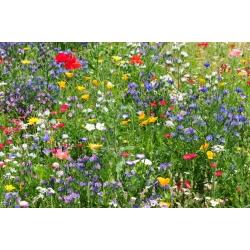Savvaļā augošu medus augi - liels iepakojums - 125 g -